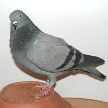 CZ-2006-6174