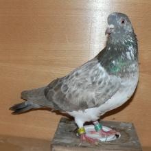 DFU-2006-4254